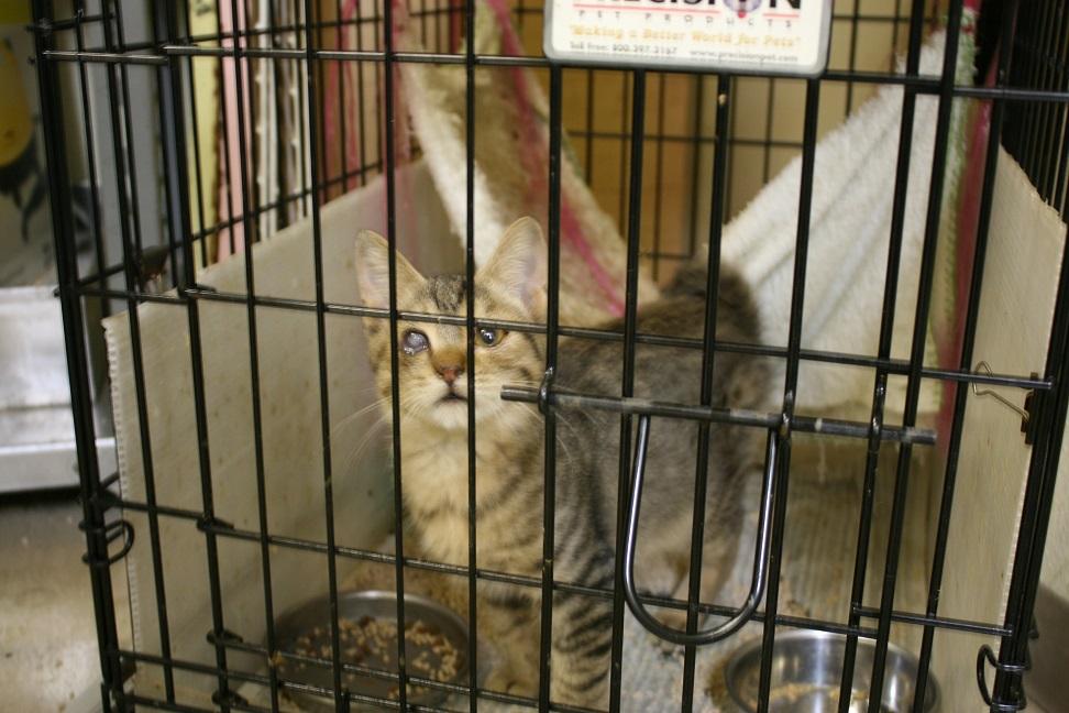 【移動先募集】センターの猫たち(9/5訪問)_f0242002_14462794.jpg