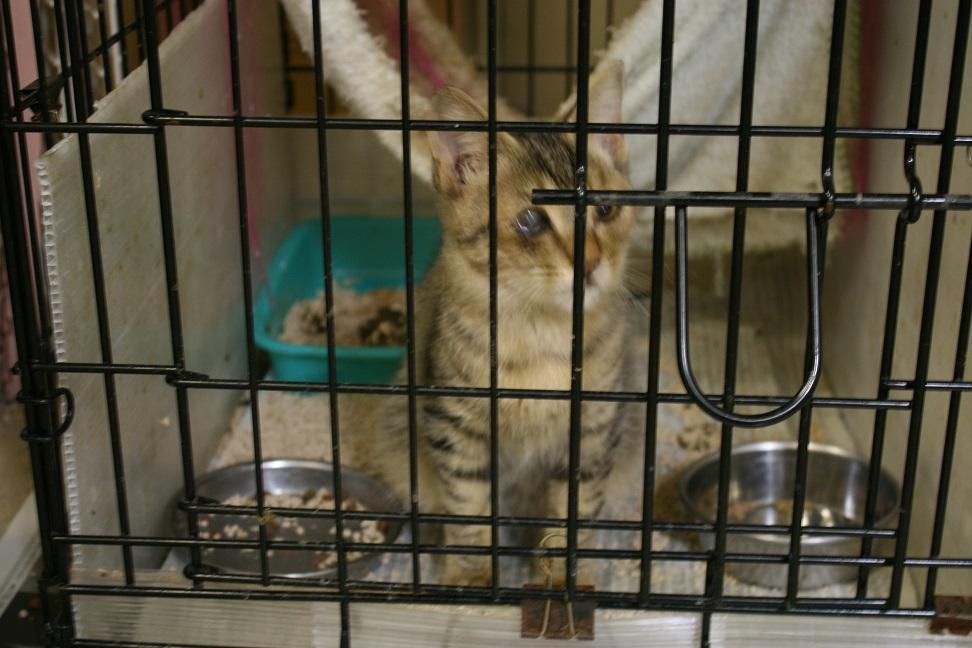 【移動先募集】センターの猫たち(9/5訪問)_f0242002_14463457.jpg