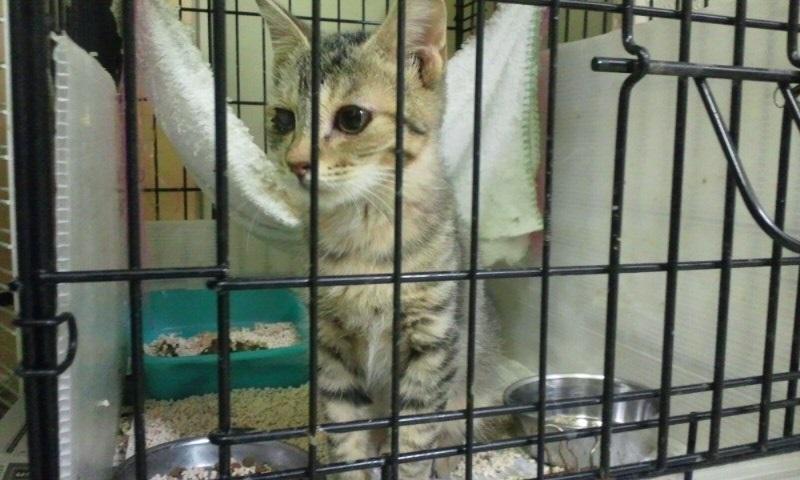 【移動先募集】センターの猫たち(9/5訪問)_f0242002_14464382.jpg