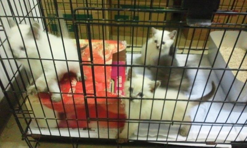 【移動先募集】センターの猫たち(9/5訪問)_f0242002_14473793.jpg
