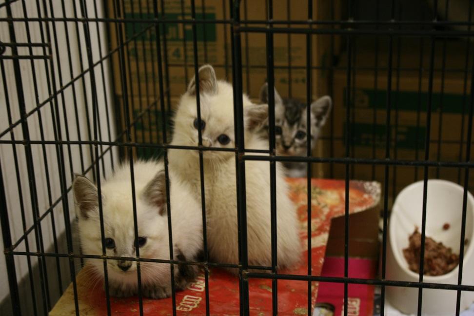 【移動先募集】センターの猫たち(9/5訪問)_f0242002_14474337.jpg