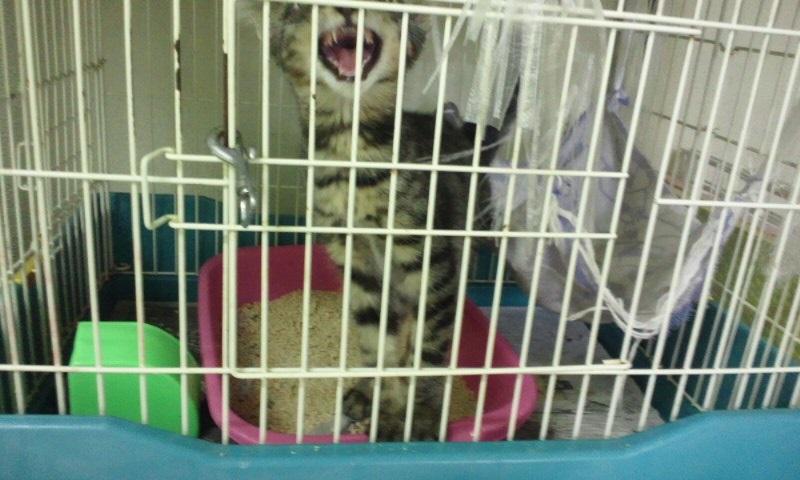 【移動先募集】センターの猫たち(9/5訪問)_f0242002_14475883.jpg
