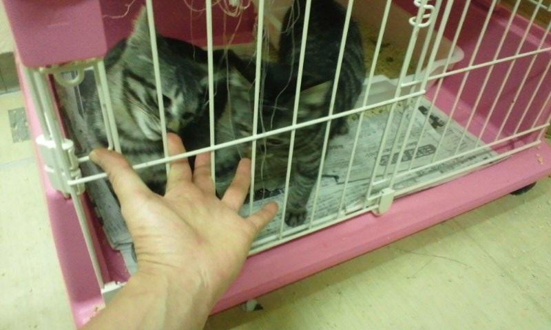 【移動先募集】センターの猫たち(9/5訪問)_f0242002_14481913.jpg