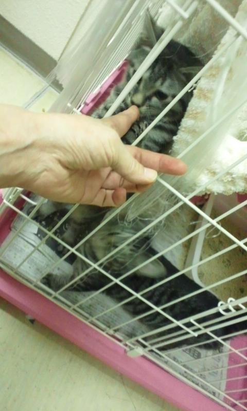 【移動先募集】センターの猫たち(9/5訪問)_f0242002_14483662.jpg