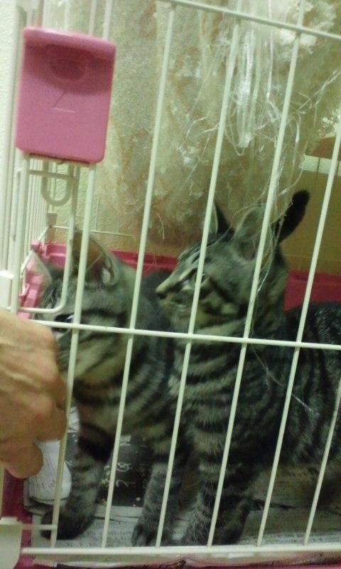 【移動先募集】センターの猫たち(9/5訪問)_f0242002_1449090.jpg