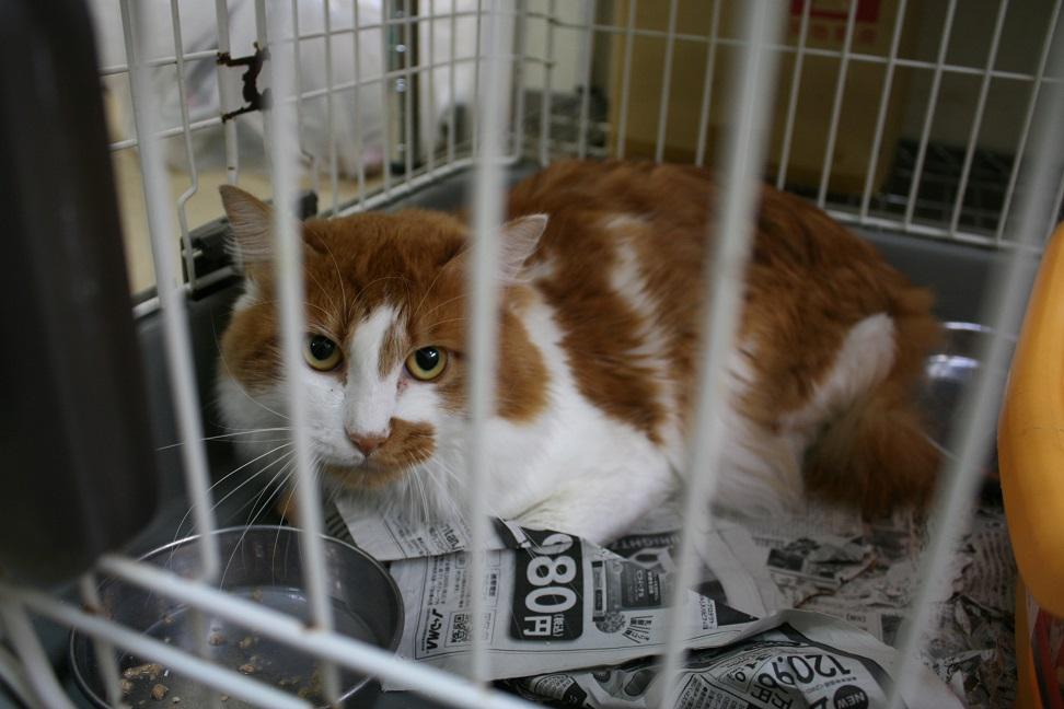 【移動先募集】センターの猫たち(9/5訪問)_f0242002_14494695.jpg