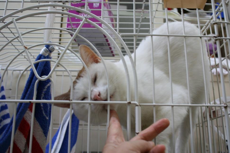 【移動先募集】センターの猫たち(9/5訪問)_f0242002_14501592.jpg