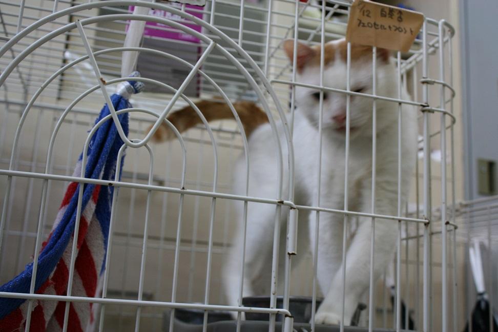 【移動先募集】センターの猫たち(9/5訪問)_f0242002_1450556.jpg