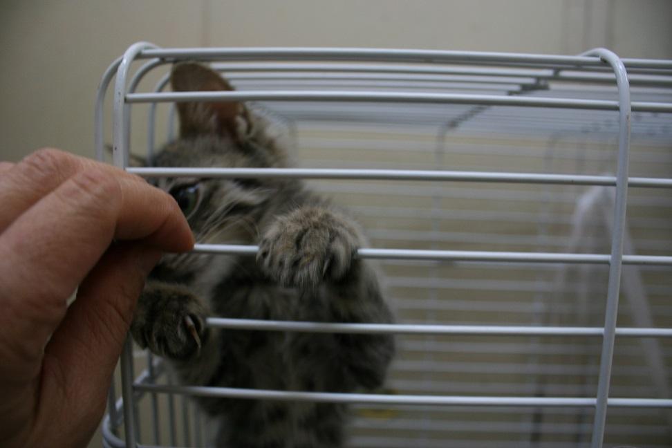 【移動先募集】センターの猫たち(9/5訪問)_f0242002_14514640.jpg