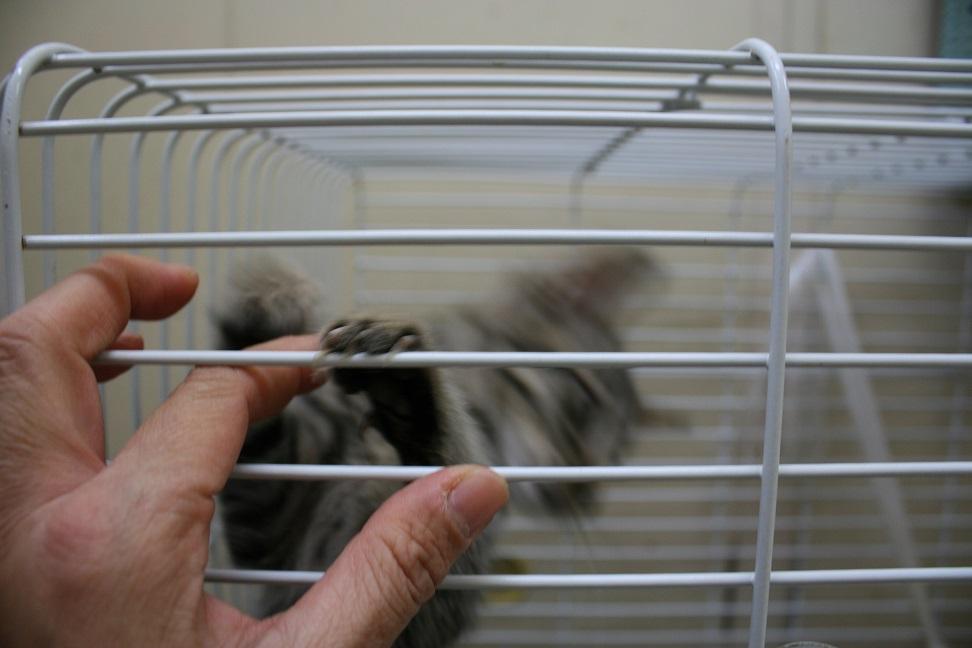 【移動先募集】センターの猫たち(9/5訪問)_f0242002_14515355.jpg