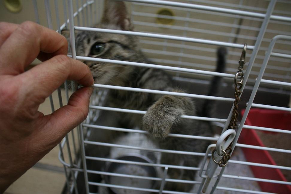 【移動先募集】センターの猫たち(9/5訪問)_f0242002_1452193.jpg