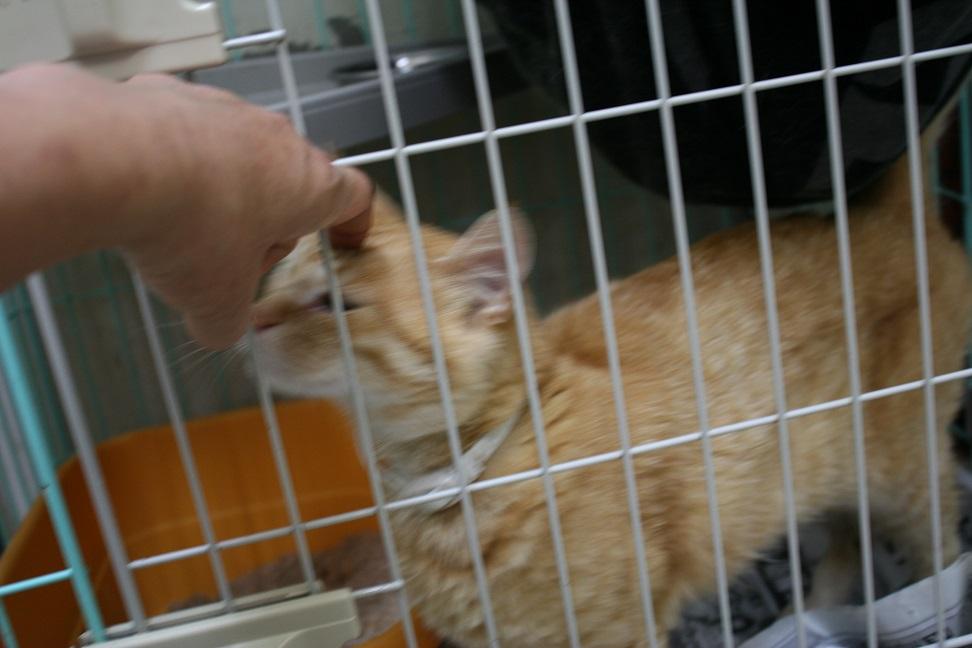 【移動先募集】センターの猫たち(9/5訪問)_f0242002_14521956.jpg