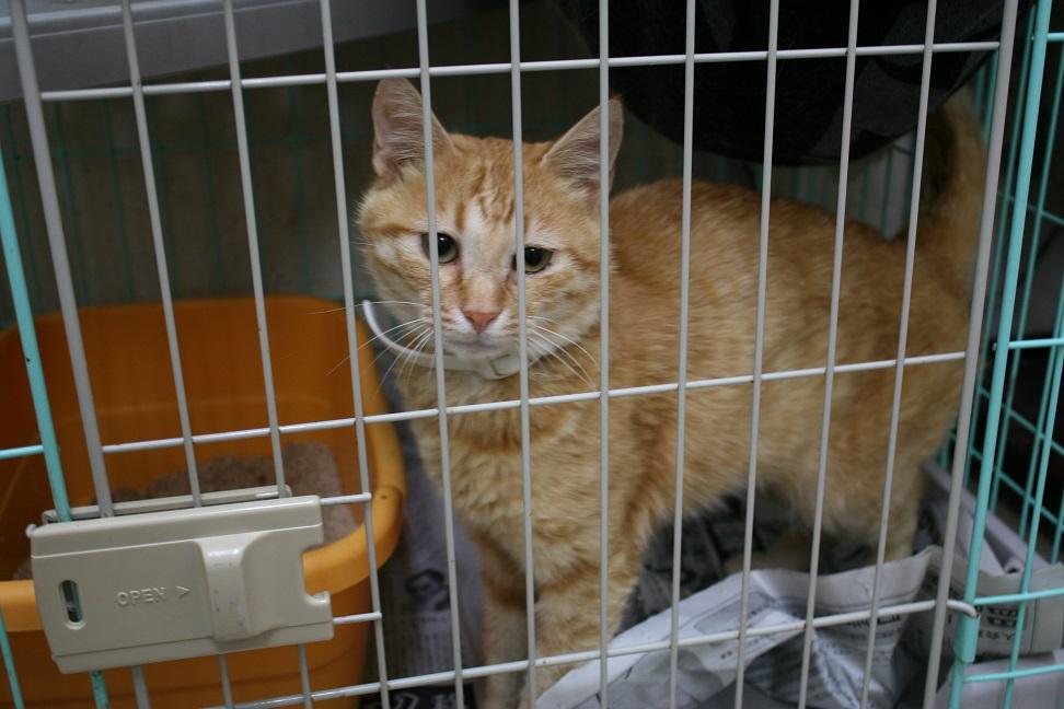 【移動先募集】センターの猫たち(9/5訪問)_f0242002_14523497.jpg