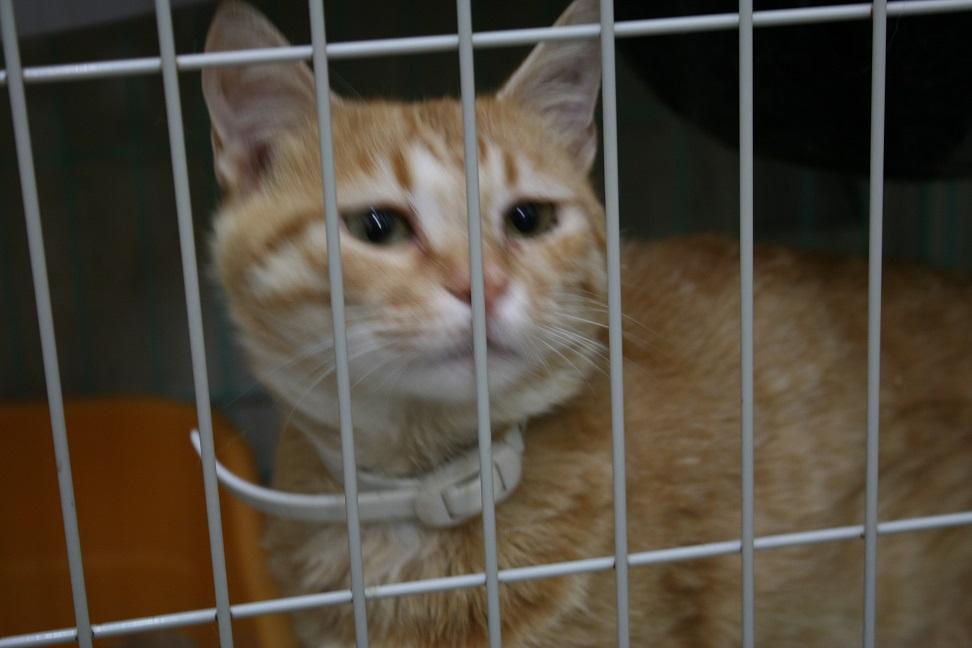 【移動先募集】センターの猫たち(9/5訪問)_f0242002_14524958.jpg