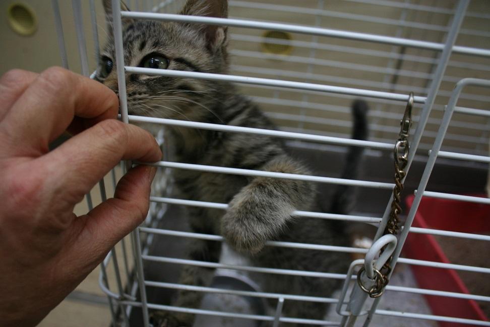 【移動先募集】センターの猫たち(9/5訪問)_f0242002_1452783.jpg