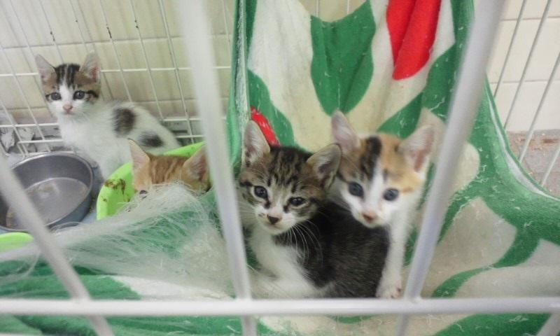 【移動先募集】センターの猫たち(9/5訪問)_f0242002_14531776.jpg