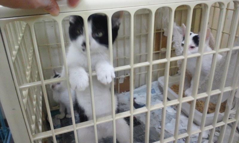 【移動先募集】センターの猫たち(9/5訪問)_f0242002_14532938.jpg