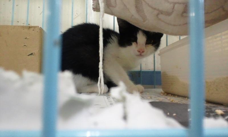 【移動先募集】センターの猫たち(9/5訪問)_f0242002_14534946.jpg