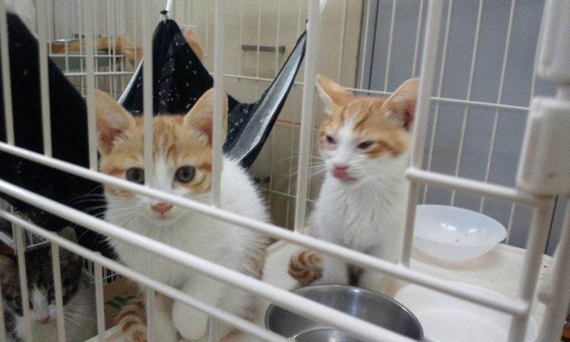 【移動先募集】センターの猫たち(9/5訪問)_f0242002_1454186.jpg