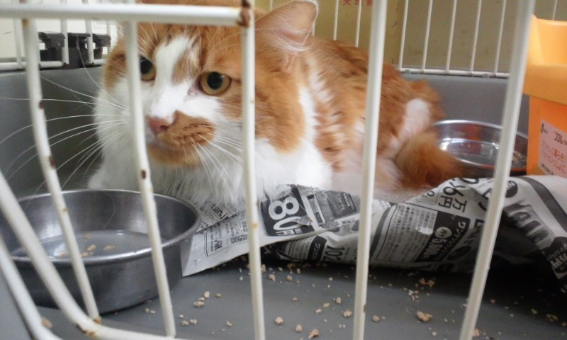 【移動先募集】センターの猫たち(9/5訪問)_f0242002_14541968.jpg