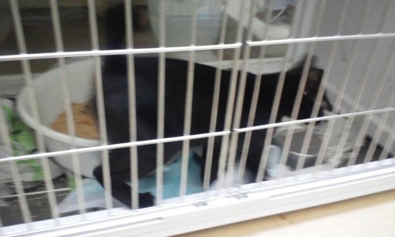 【移動先募集】センターの猫たち(9/5訪問)_f0242002_14544498.jpg