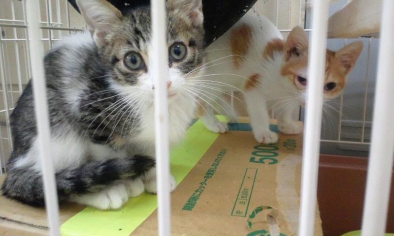 【移動先募集】センターの猫たち(9/5訪問)_f0242002_1454930.jpg