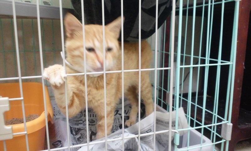 【移動先募集】センターの猫たち(9/5訪問)_f0242002_1456549.jpg