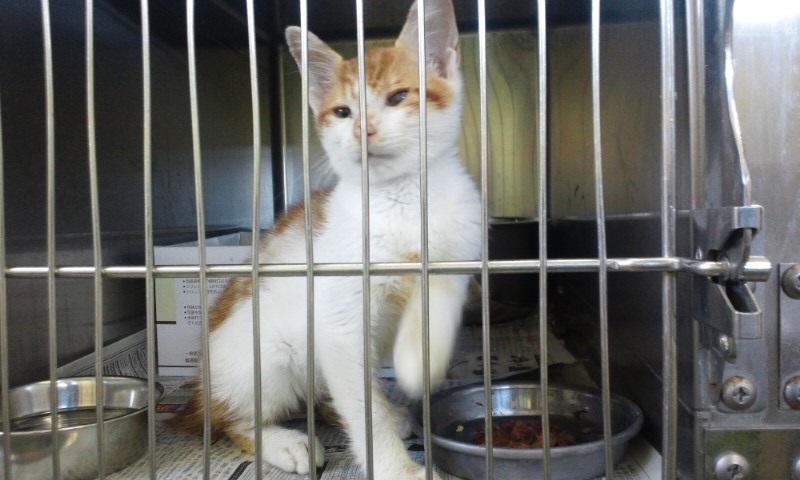 【移動先募集】センターの猫たち(9/5訪問)_f0242002_14582485.jpg