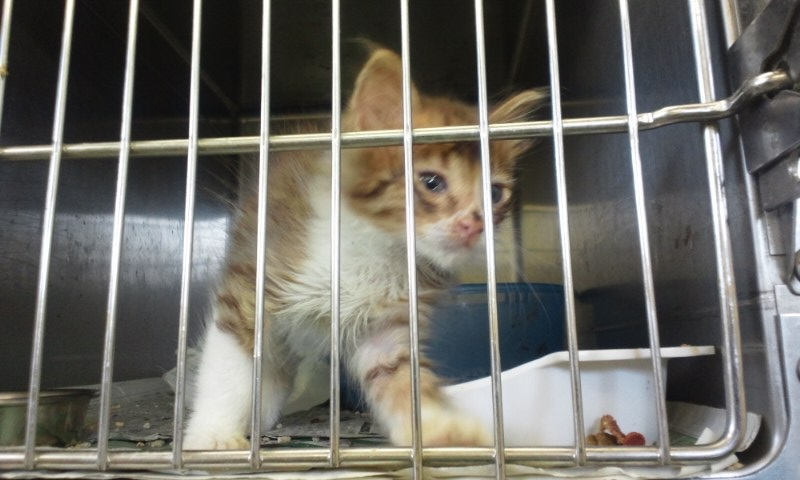 【移動先募集】センターの猫たち(9/5訪問)_f0242002_14583313.jpg