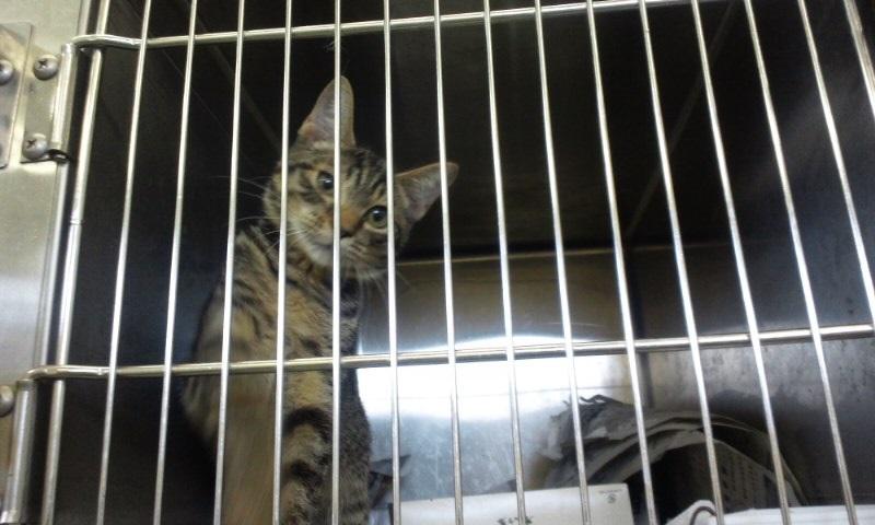 【移動先募集】センターの猫たち(9/5訪問)_f0242002_14584571.jpg