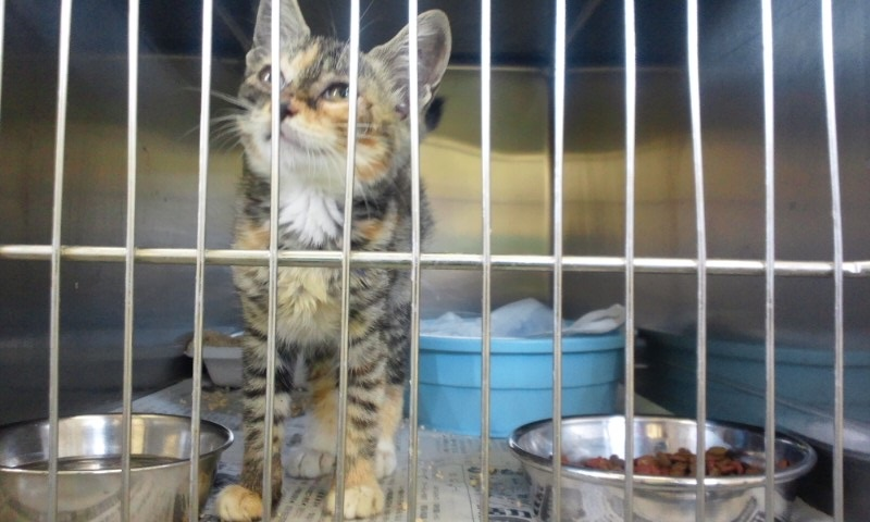 【移動先募集】センターの猫たち(9/5訪問)_f0242002_14585415.jpg