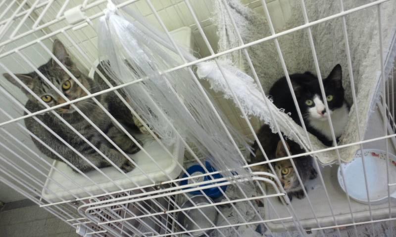 【移動先募集】センターの猫たち(9/5訪問)_f0242002_14593788.jpg