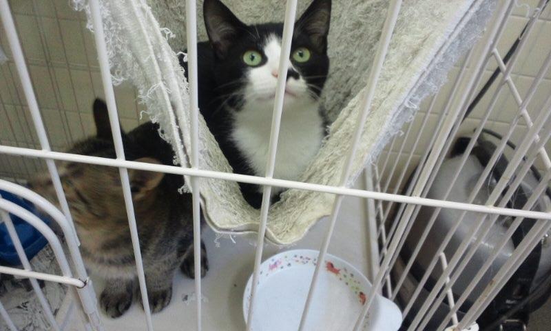 【移動先募集】センターの猫たち(9/5訪問)_f0242002_1543777.jpg