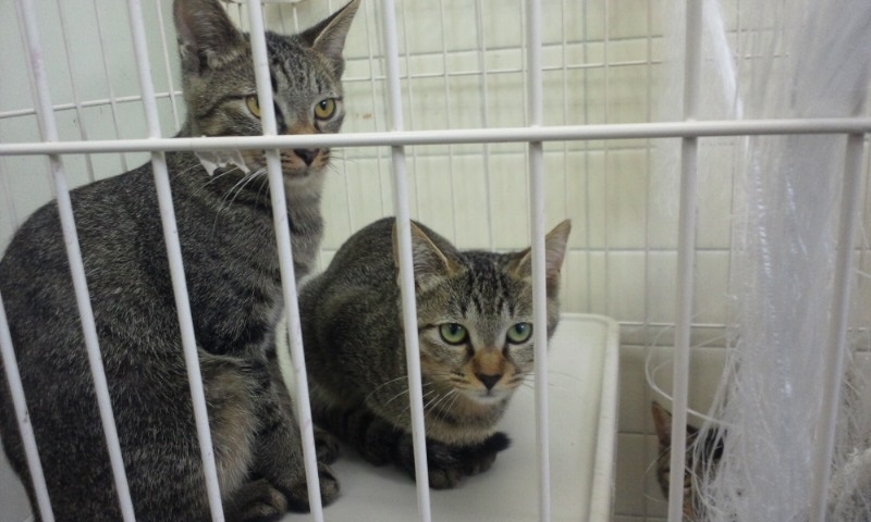 【移動先募集】センターの猫たち(9/5訪問)_f0242002_154448.jpg