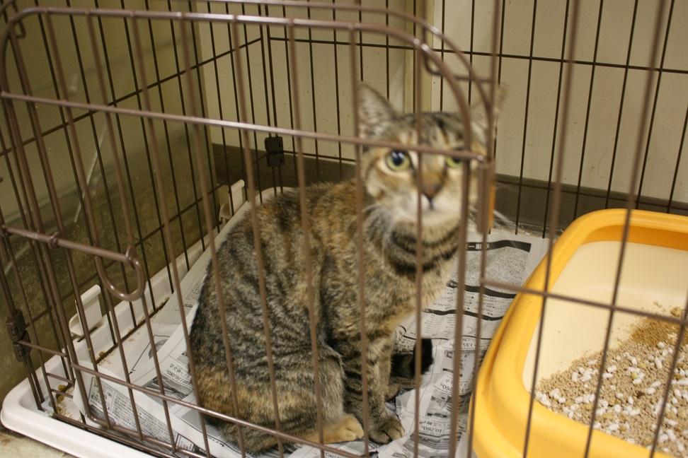 【移動先募集】センターの猫たち(9/5訪問)_f0242002_1551774.jpg