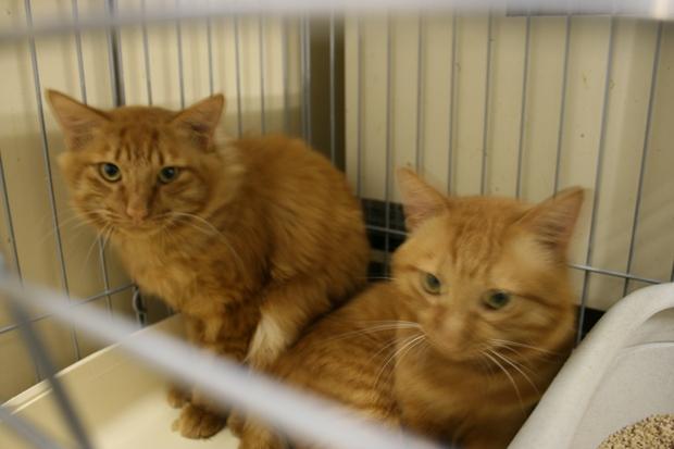 【移動先募集】センターの猫たち(9/5訪問)_f0242002_1555256.jpg