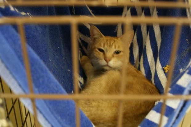 【移動先募集】センターの猫たち(9/5訪問)_f0242002_155845.jpg