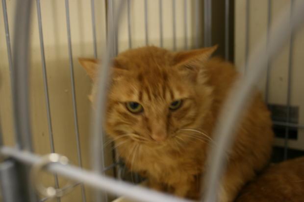 【移動先募集】センターの猫たち(9/5訪問)_f0242002_1563695.jpg