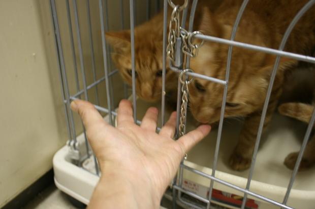 【移動先募集】センターの猫たち(9/5訪問)_f0242002_156443.jpg