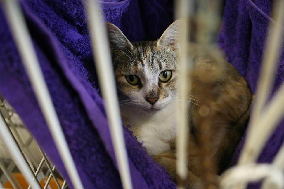 【移動先募集】センターの猫たち(9/5訪問)_f0242002_1564666.jpg