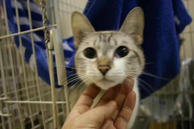 【移動先募集】センターの猫たち(9/5訪問)_f0242002_157821.jpg