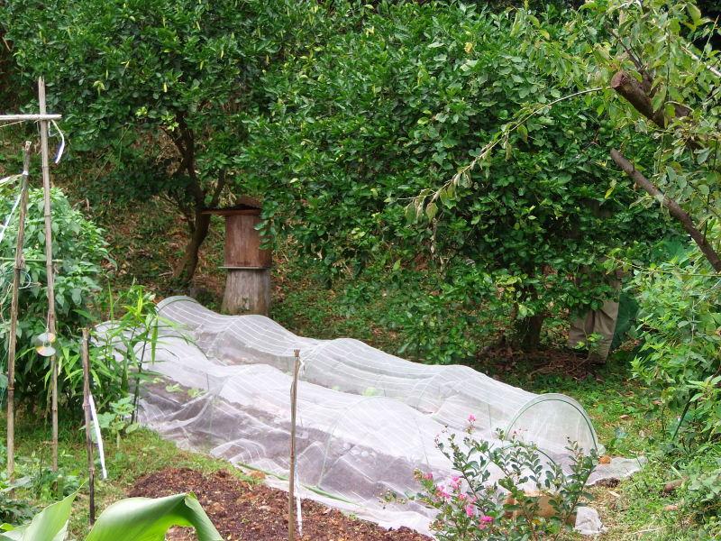 雨上がりの「畑仕事」で。_a0125419_20530478.jpg