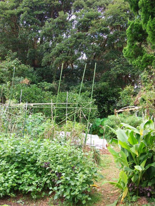 雨上がりの「畑仕事」で。_a0125419_20563073.jpg