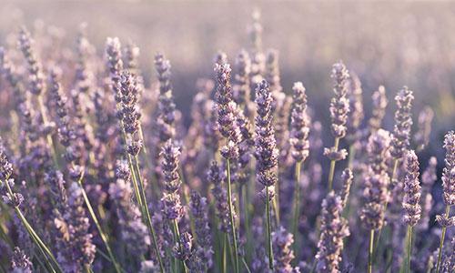 Lavenderのコースター_c0079828_14243481.jpg