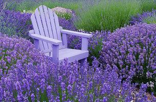 Lavenderのコースター_c0079828_1424944.jpg