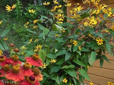 黄色の花、大集合~_e0326953_23581240.jpg