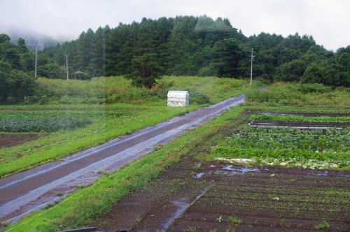 長雨に、ダメ押しの台風_c0110869_724693.jpg