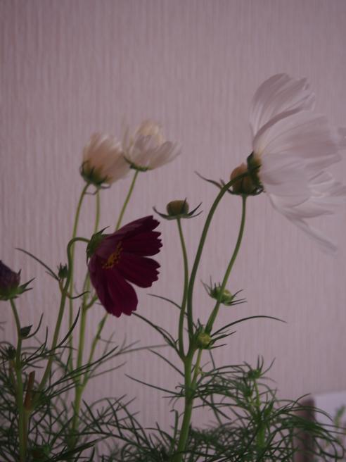 c0220700_20103926.jpg