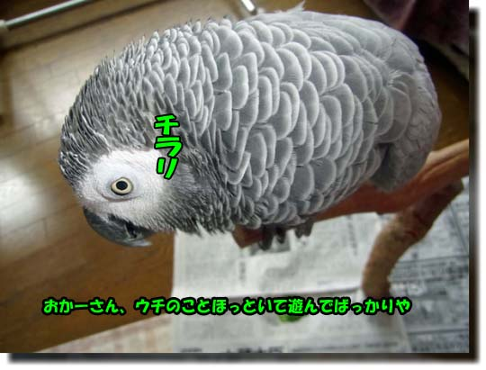 c0133013_113342.jpg
