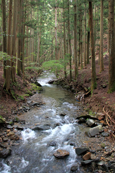 北山の渓_e0048413_19494158.jpg